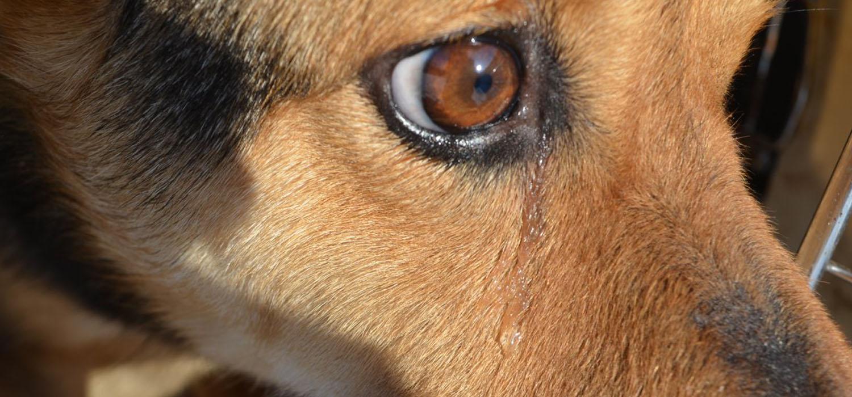 Auch Hunde können weinen
