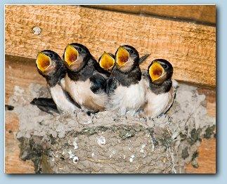 ... wir suchen für viele vorgemerkte Kunden ein neues Nest.