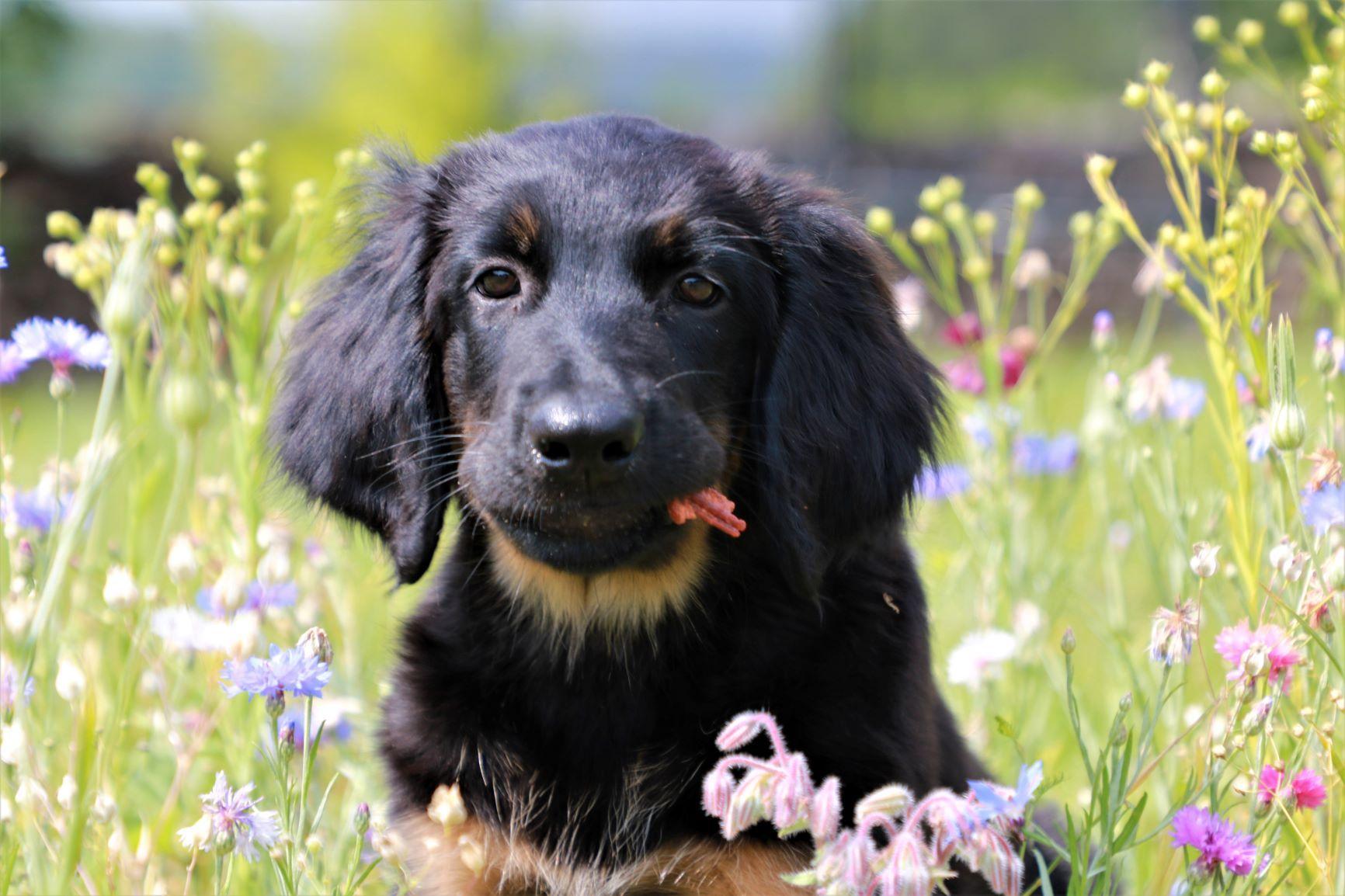 Ava auf der Blumenwiese, 3 Monate alt