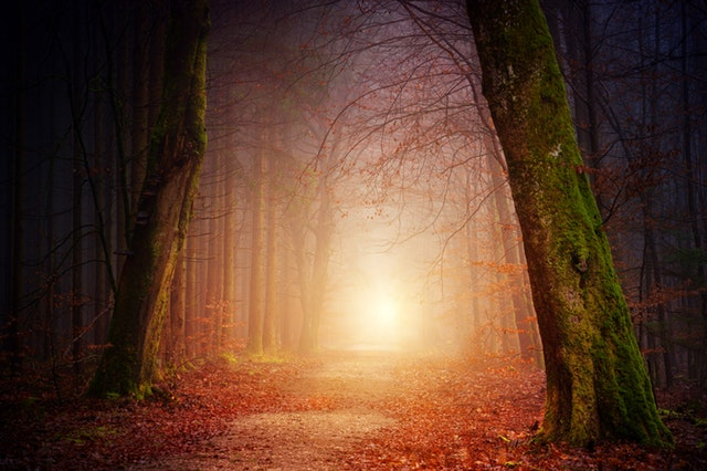eerie-fog-foggy-1102908/Johannes Plenio