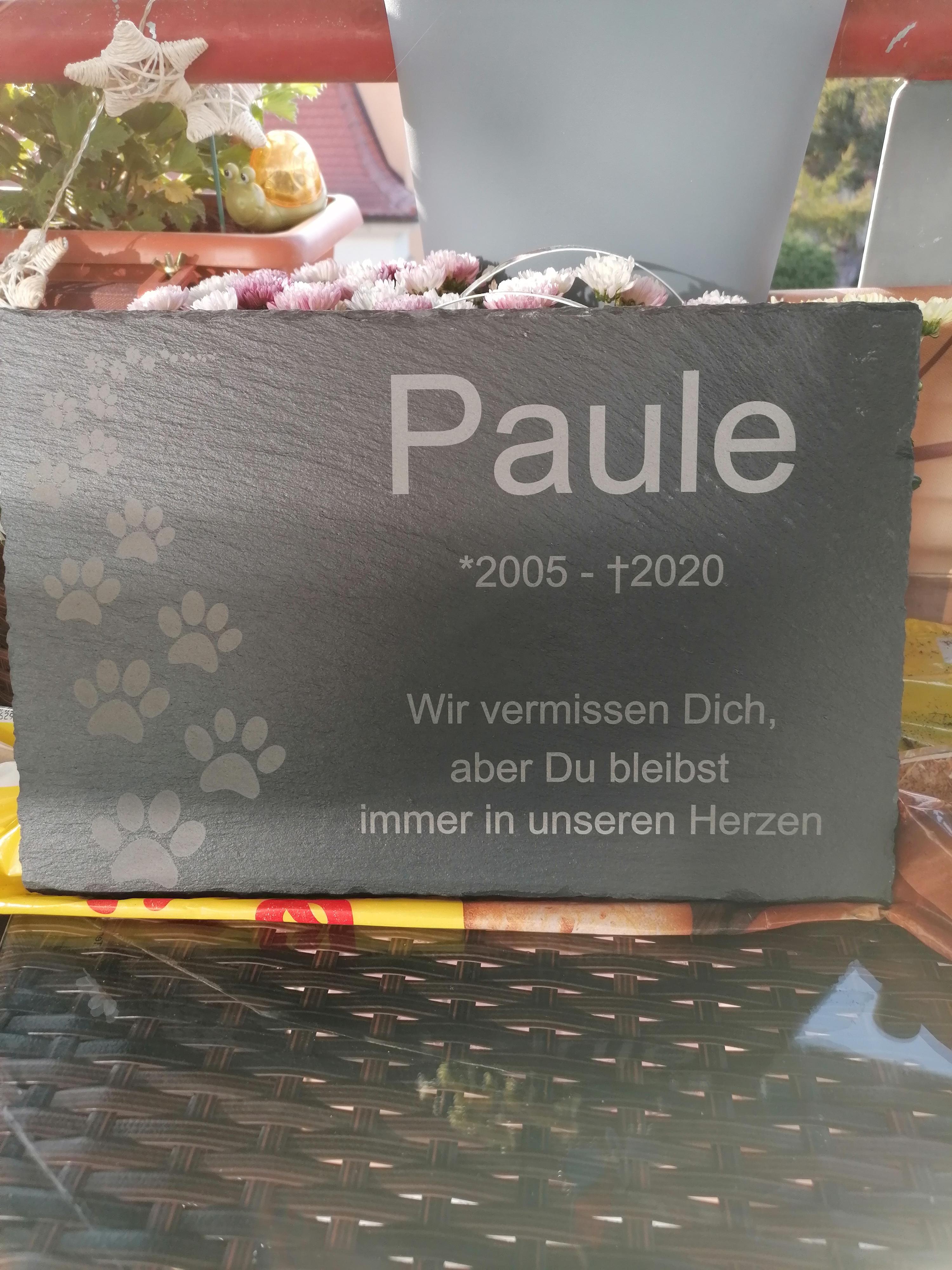Best dog ever. Ruhe in Frieden. Du bleibst unvergessen.