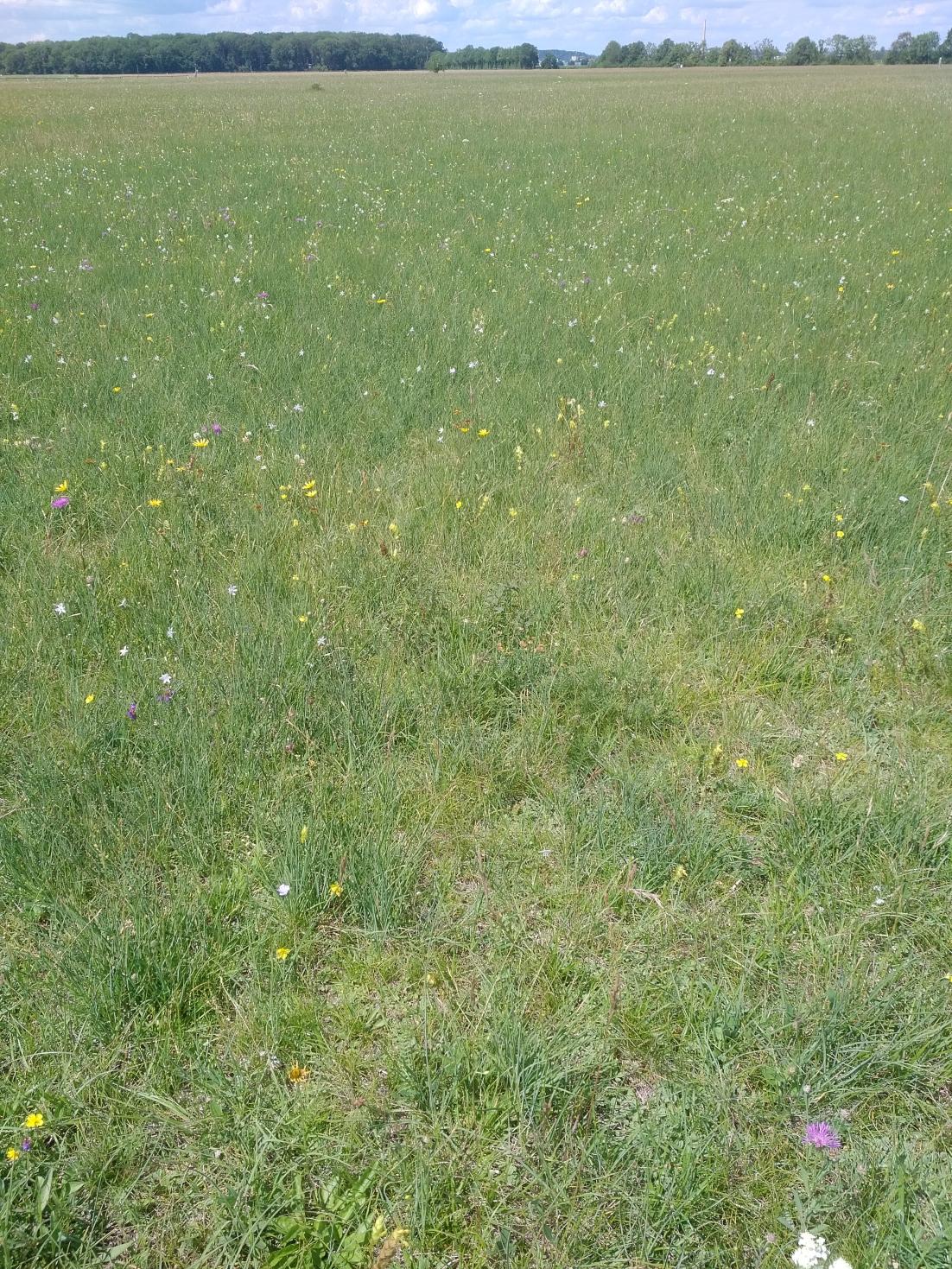 Garchinger Heide, ein Beispiel für extrem nährstoffarme Wiesen