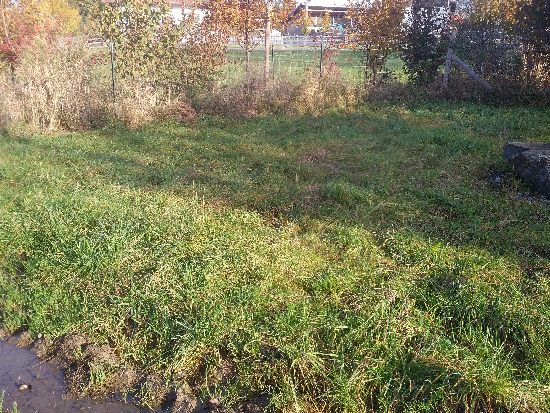 Fläche mit Maulwurfshügeln, Zaun und Stein mähen: vorher
